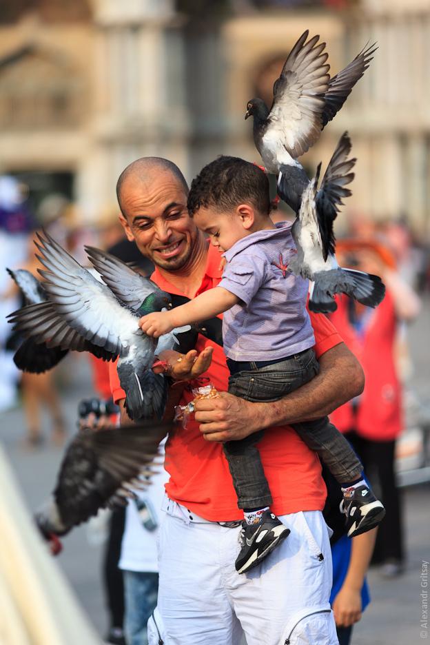 rabid pigeons.jpg