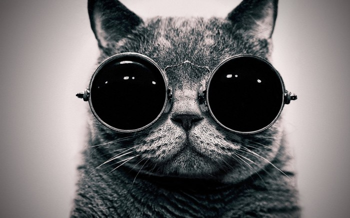 Goggle Cat.jpg