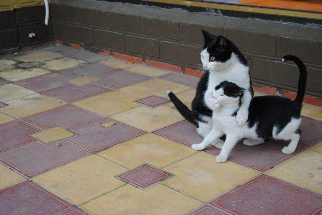 dont speak kitty.jpg