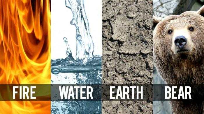 fire water earth bear.jpg