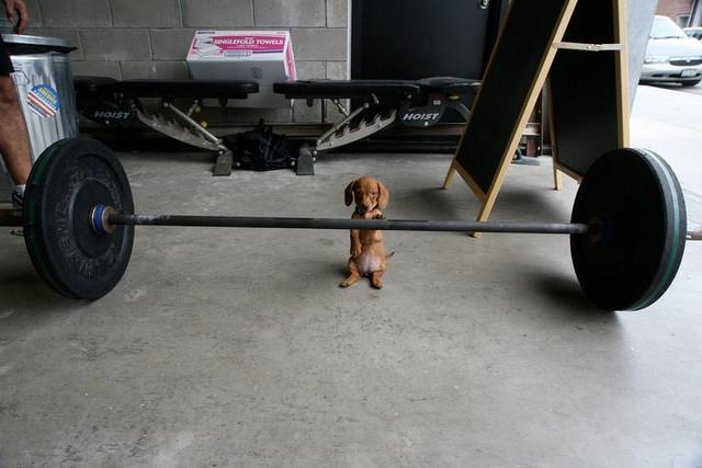 muscle puppy.jpg