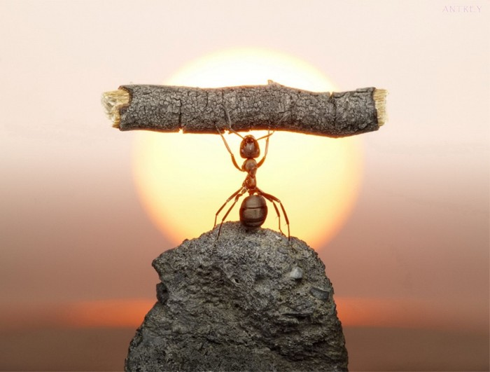 super ant.jpg