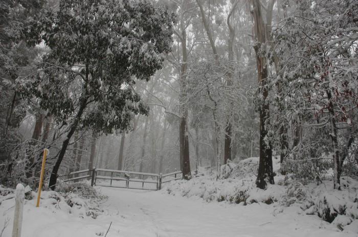 Stock___Snowy_Forest_by_OscarandCeara