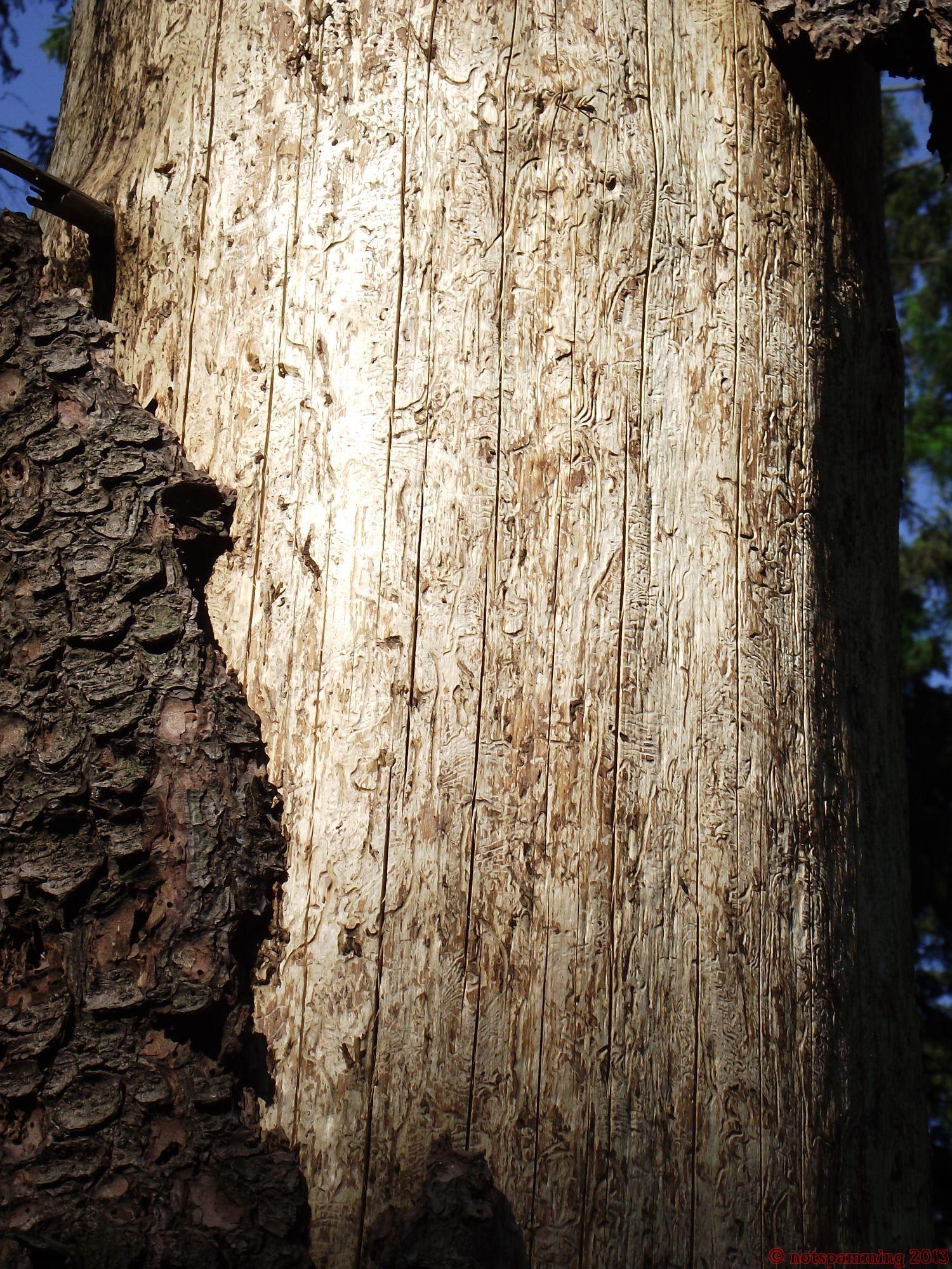 Woodworm(s) handiwork