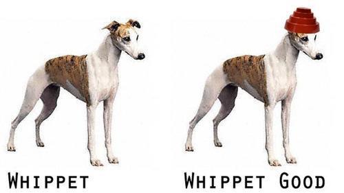 Whippet, Whippet Good.jpg