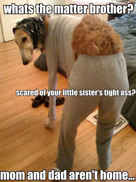 brother sister dog.jpg