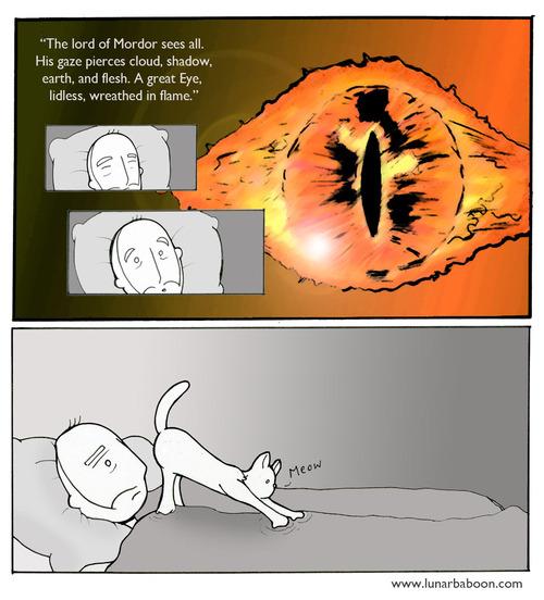 eye of cat.jpg