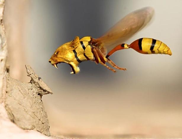 lion wasp.jpg