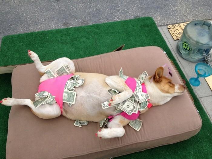 stripper dog.jpg