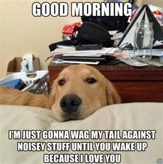 Good Morning Dog.jpg