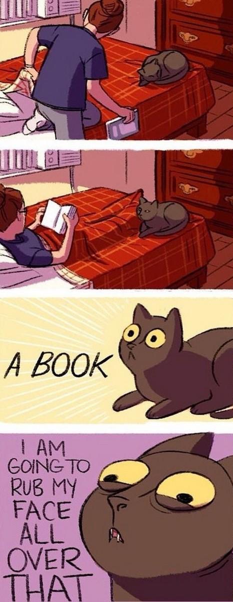 cat vs book.jpg