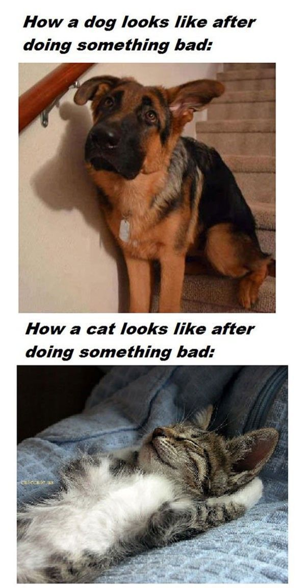 dogs vs cats after doing something bad.jpg