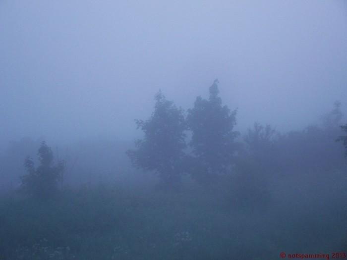 foggy morning 700x525 Nature Image Dump trees plant Nature lake grass flower ducks