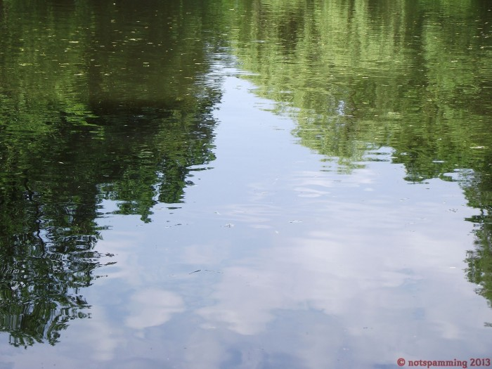 lil lake 3 700x525 Nature Image Dump trees plant Nature lake grass flower ducks