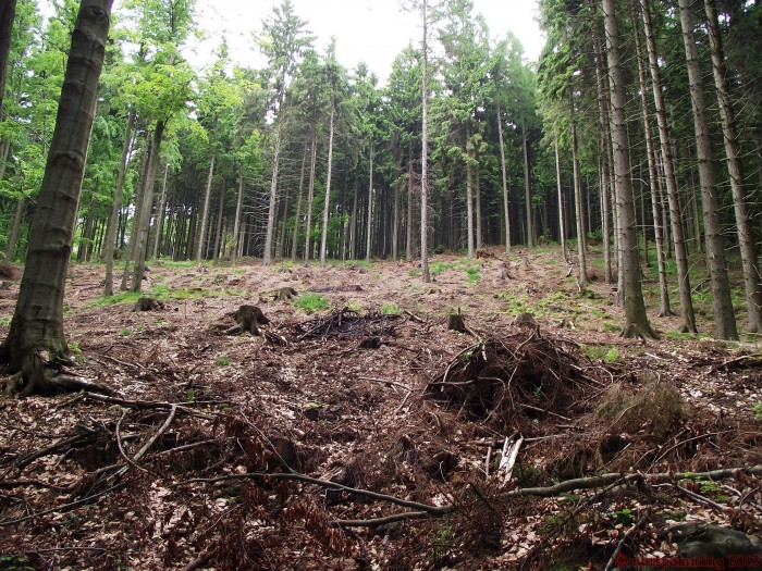woodcutting 700x525 Nature Image Dump trees plant Nature lake grass flower ducks