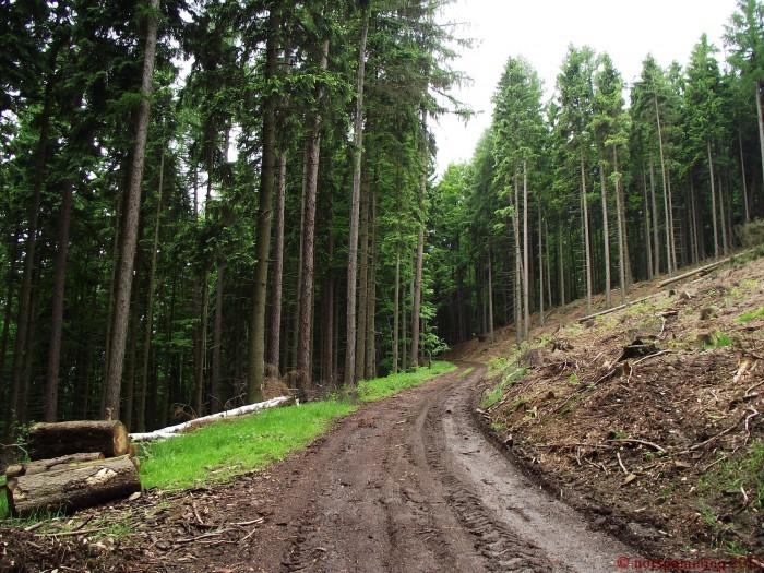 woodcutting 2 700x525 Nature Image Dump trees plant Nature lake grass flower ducks