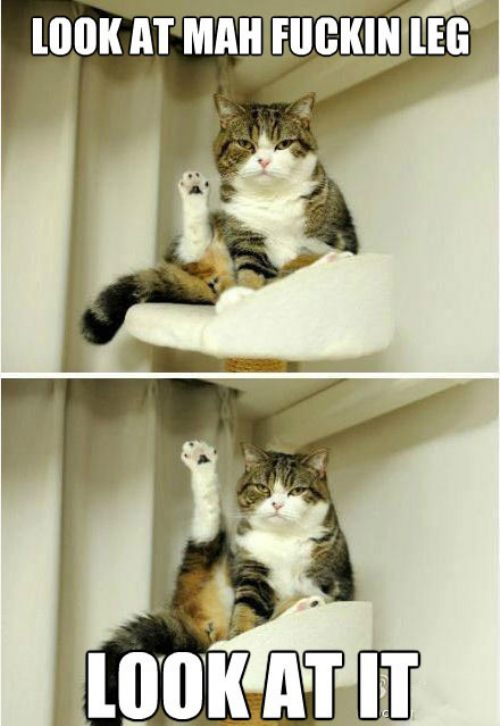 cat leg.jpg