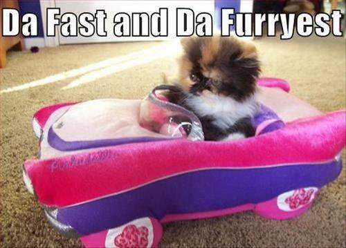 da fast and da furryest.jpg