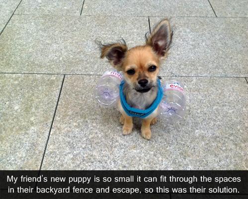 small puppy.jpg