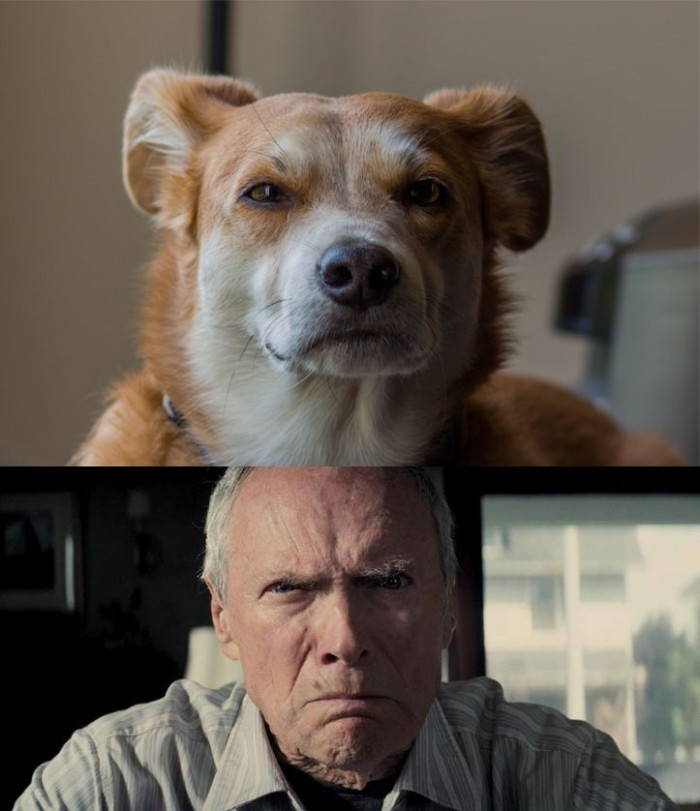 Clint Eastwood dog stare.jpg