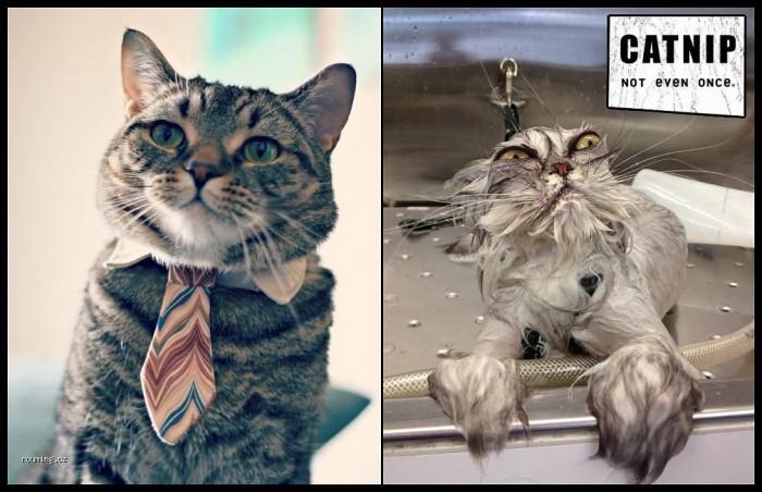 catnip - not even once.jpg