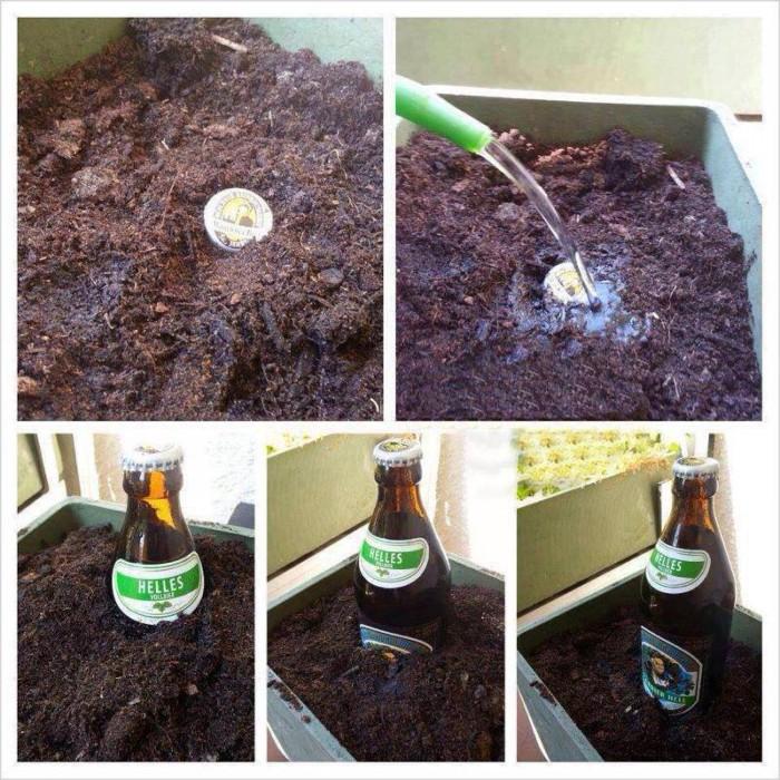grow a beer.jpg