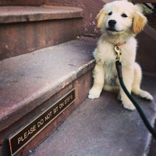 rebel dog.jpg