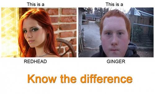 redhead vs ginger.jpg