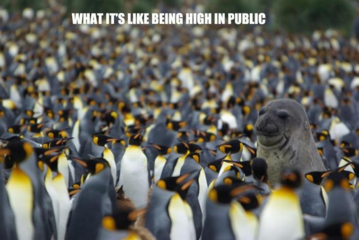 what it's like being high in public.jpg