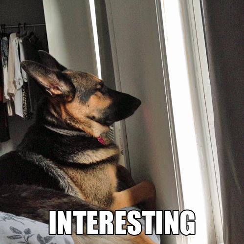interesting dog.jpg