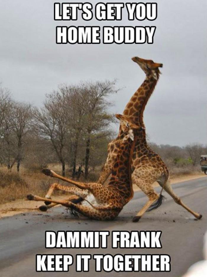Drunk Giraffe.jpg