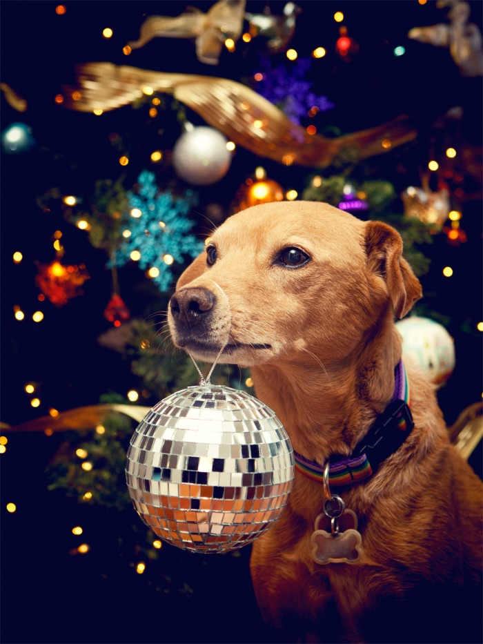 Disco Dog 700x933 Disco Dog X Mas Humor Cute As Hell Animals