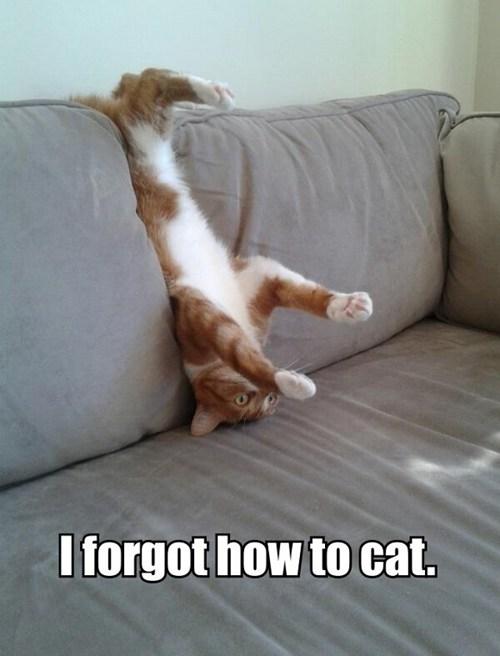 I forgot how to cat.jpg