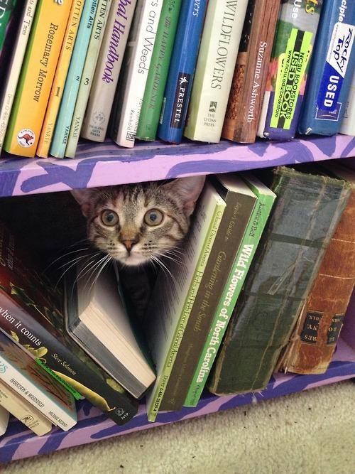 Library Cat.jpg