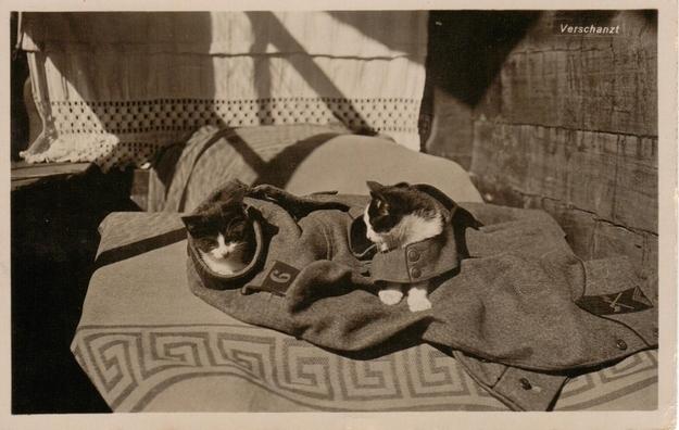 Military Cats.jpg