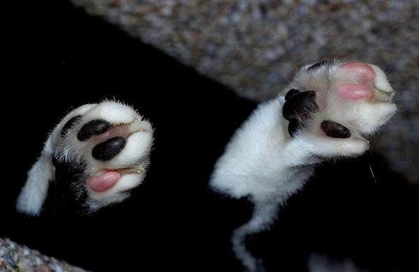 Pink Toes.jpg