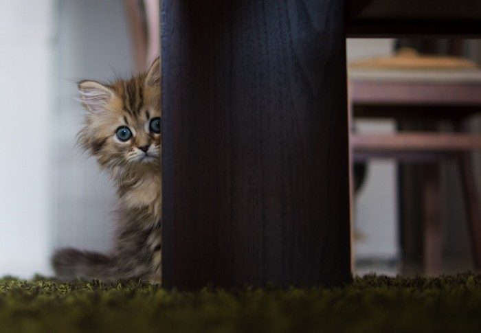 Scaredy Cat.jpg