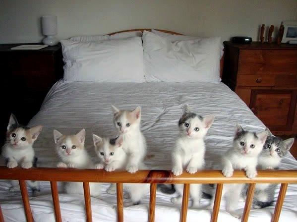 bed kittens.jpg
