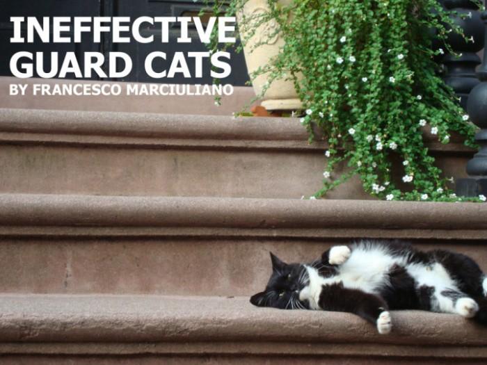 ineffective guard cats.jpg
