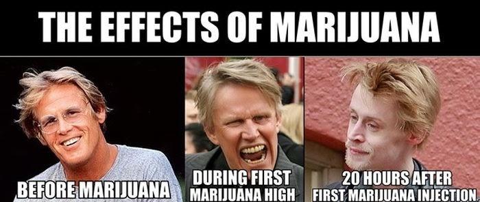marijuana_disinformation_finest_13