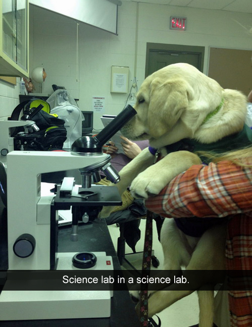 science lab in a science lab.jpg