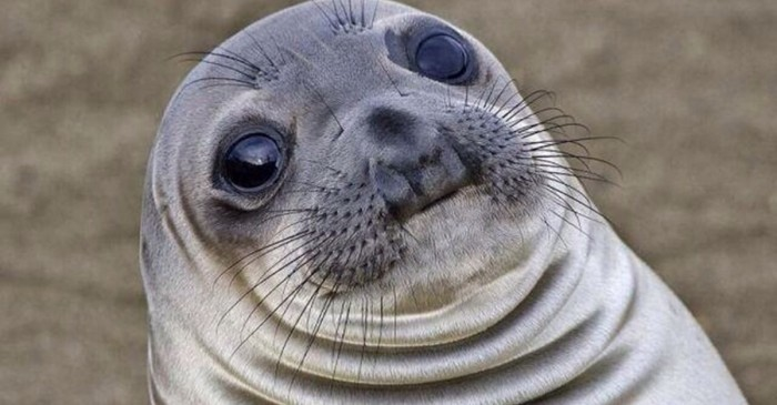 Awkward Seal.jpg