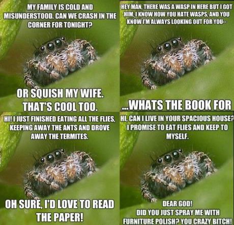 misunderstood_spider