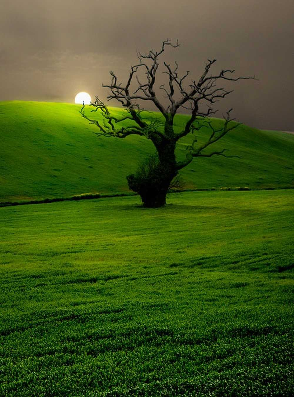 a lonely tree.jpg