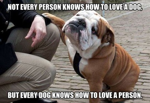not every person knows how to love a dog.jpg