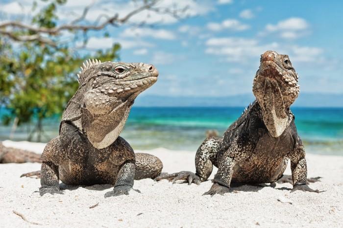 1402114732177 700x466 geckos on the sand animals