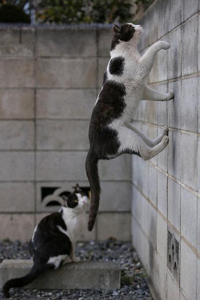 cat walk Cats