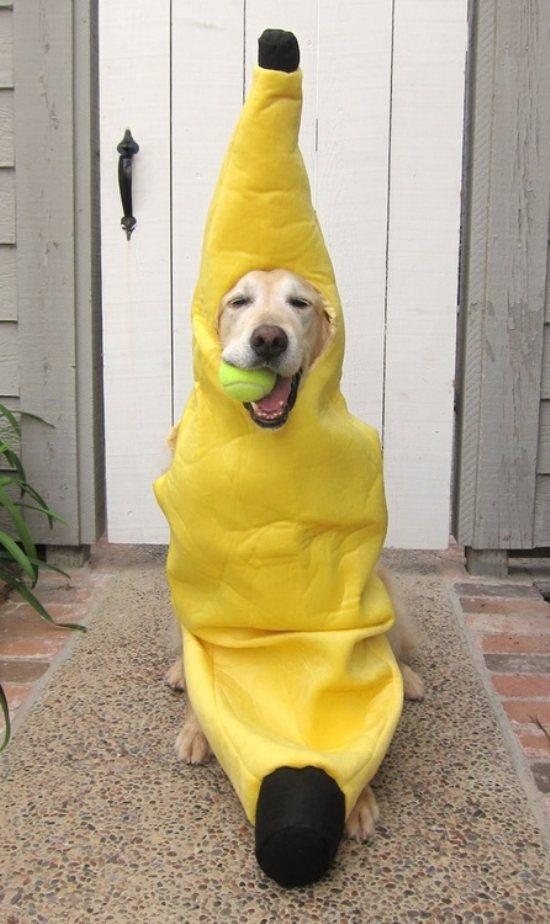 banana dog banana dog Food Cute As Hell Animals cosplay