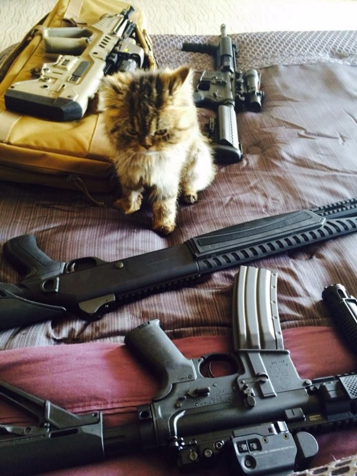 military kitty 700x933 military kitty Weapons lolcats