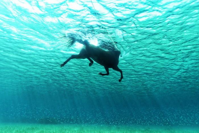 underwater horse.jpg